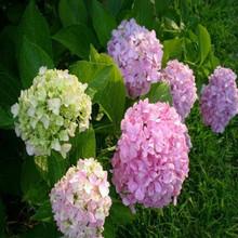 Flores frescas por atacado com alta qualidade