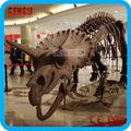 de fibra de vidrio de esqueleto de dinosaurio fósil y para el museo