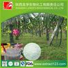pitaya dragon fruits p.e. dragon fruit extract