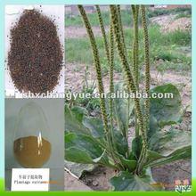 No Any Additive Plantago asiatica L.