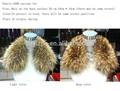 1 pellicce di cane procione colore naturale di alta qualità reale collo di pelliccia di procione giacca