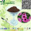 High quality of Echinacea purpurea powder