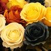 25'' classical decorative flower rose silk flower for home decor
