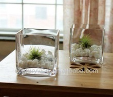 hot selling Clear Glass Cube Vase