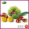 chinois frais en vrac châtaignes grains pour la vente