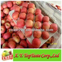China fresh fuji apple fruit