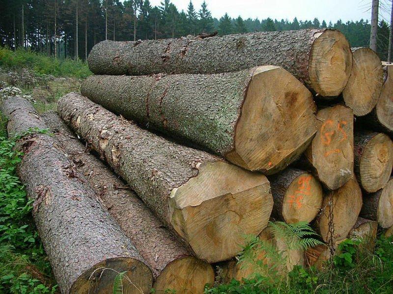 Mepal Wood Log Buy Wood Round Logs Mepal Wood Log