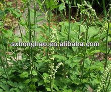 2.5%-5% Triterpene Glycoside Cimicifuga racemosa extract