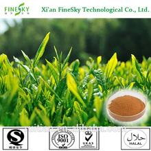 green tea extract organic,tea polyphenols beauty