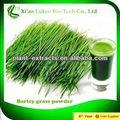 doğal organik gıda renk arpa maltı