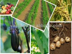 Price can Calcium Ammonium Nitrate