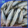 fábrica de suministro fresco de pescado sardina entera