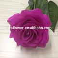 природных touch свет пурпурная роза цветы для свадьбы украшение, латекса реального touch малого розовые цветки,