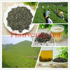 China Wholesale Chunmee Green Tea 9371, hot sale in Africa market