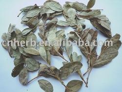 Blueberry leaf( Folium Vaccinium uliginosum )