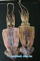 dried sleeve-fish