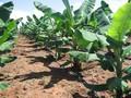 ahorro de agua de cultivo de la tierra de riego por goteo de tuberías