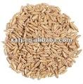 semillas de avena en polvo extracto