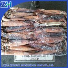argentina illex squid bait