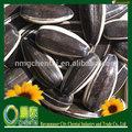 raccolta di semi di girasole in guscio