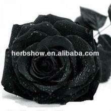 Black Rose Seeds/Green/Yellow/Gold/Purple/Blue Rose Seeds