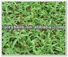 Stevia Powder Extract 98%Rebaudiosie-A