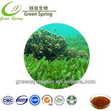 Brown seaweed extract, seaweed extract powder,herb medicine