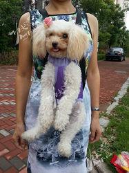 Original stylish purple chest pet bags