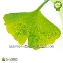 Cardiovascular & Brain Ginkgo Biloba Extract/Ginkgo Biloba Extract/ Ginkgo Biloba Leaf Extract