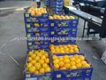 frutta morket 2 kg