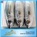 De mariscos de exportación de pescado congelado