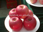 Chinese fresh apple