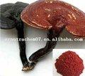 De alta calidad de ganoderma lucidum extracto/extracto de reishi/seta de reishi extracto
