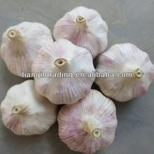 chinese normal white garlic price