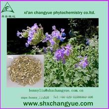 Natural Fineleaf Schizonepeta Herb Extract