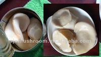 Quality and cheap Canned Baiing Mushroom
