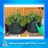 Grow Bags / Potato Planter/ carrot planter bag