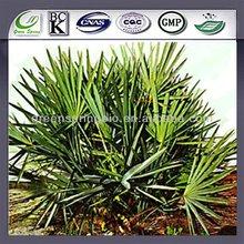 25% -45% saw palmetto P.E,Saw Palmetto,natural Saw Palmetto