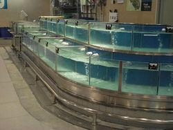 stainless steel aquarium