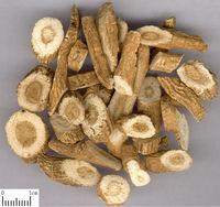 Traditional Chinese Medicinal Herb Works Effective Radix Isatidis Banlangen Isatis Root