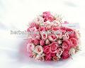 nome botânico rosa para sementes de todos os tipos de bela flor sementes