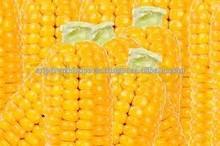 Yellow corn specification