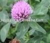 Red Clover Extract Powder 20%Isoflavones