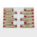 Fábrica de suministro dental de acrílico falsas dientes/compuesto de la dentadura anterior y posterior de los dientes