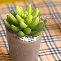 Desktop plants artificial flower set fresh cactus office desk decoration