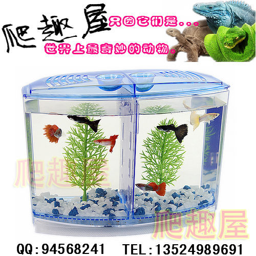 Mini fish tank aquarium fighting fish box fighting fish tank small tropical fish tank tiddlers(China (Mainland))