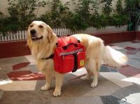N pet picnic bag pet bag pet bag