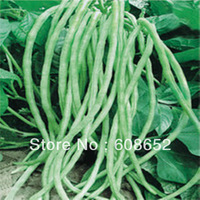 Yield (gross rack beans) - 20 fruits and seeds (seeds) Bag Home Garden - Free Delivery
