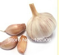 SE1044 Free Shipping 30 Seeds Cloves Garlic Seeds, Health Organic New seeds For Cooking