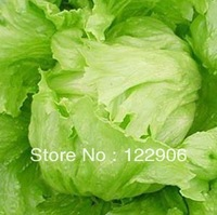 SE1051 Free Shipping, 1000 Seeds Health Green Ball  Lettuce Seeds, Organic Vegetable seeds